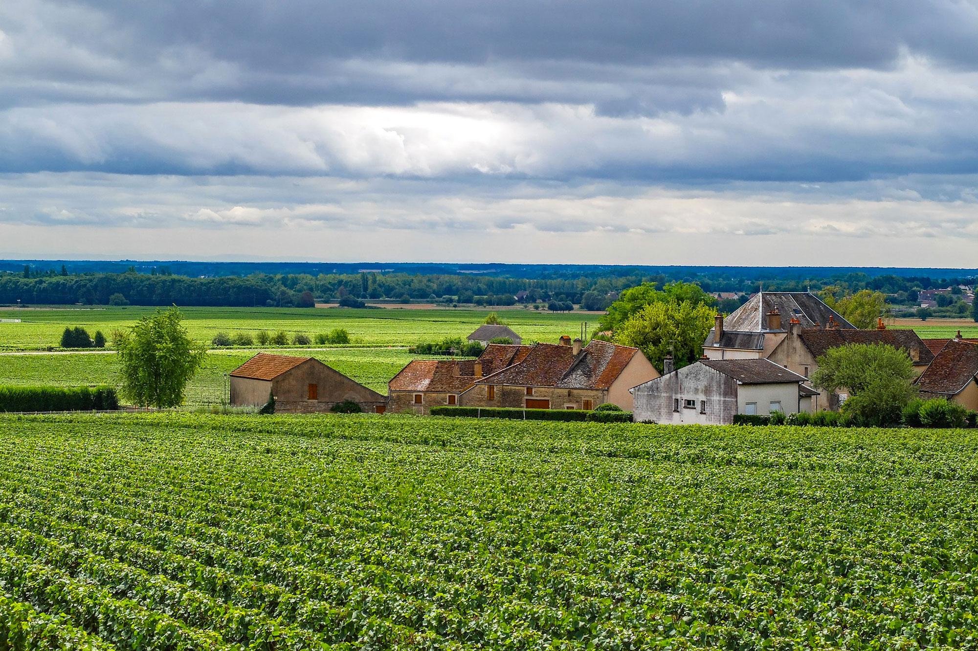 tourisme viticulteur vin